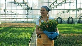 Lächelnde Frau geht in ein Glashaus und hält Bündel Tulpen in den Händen stock video