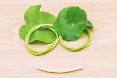 Lächelnde Gesichtsform von grünem asiatischem Pennywort treiben Blätter stockfotografie