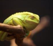 Lächelnde grüne Kröte Lizenzfreie Stockfotografie
