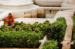 Lächelnde indische Frau, die Blumen bei Amber Palace pflanzt Stockbilder