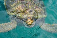 Lächelnde Schildkröte Lizenzfreie Stockfotos