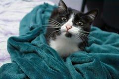 Lächelnde Schwarzweiss-Katze auf einer grünen Decke stockfotografie