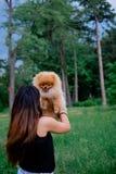 Lächelnde Uhr des Hund-pomeranian Spitz die Abendsonne an der Park ` s Natur Stockfoto