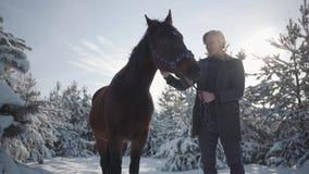 Lächelnder bärtiger Mann, der auf entzückender brauner vollblütiger Stellung des Kopfes Pferdezwischen Tannenbäumen gegen die Son stock footage