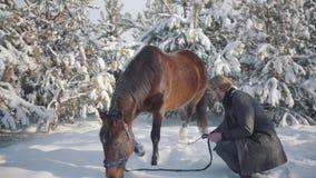 Lächelnder bärtiger Mann schlägt mit einer Niederlassung auf dem Boden nahe dem entzückenden braunen vollblütigen Pferd und lässt stock video footage