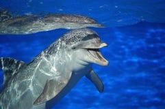 Lächelnder Delphin Stockfotos