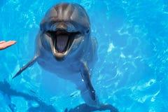 Lächelnder Delphin Delphine Swim im Pool Stockbild