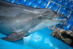 Lächelnder Delphin im dolphinarium Lizenzfreie Stockfotografie