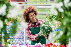 Lächelnder Florist beim Halten einer schönen eingemachten Gänseblümchenblumenanlage Lizenzfreie Stockfotos