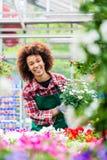 Lächelnder Florist beim Halten einer schönen eingemachten Gänseblümchenblumenanlage für Verkauf Lizenzfreie Stockfotos