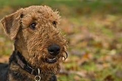 Lächelnder glücklicher Hund stockfoto