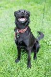 Lächelnder Hund Lizenzfreies Stockfoto
