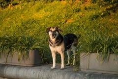 Lächelnder Hund Stockfoto