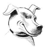 Lächelnder Hund stock abbildung