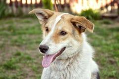 Lächelnder Hund fest heraus seine Zunge draußen im Gras Lizenzfreies Stockbild