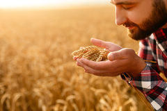 Lächelnder Mann, der Ohren des Weizens nahe seinem Gesicht und Nase auf einem Hintergrund ein Weizenfeld hält Glückliche Agronome stockbilder