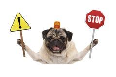 Lächelnder Pug verfolgen das Halten des roten Stoppschildes und des gelben Ausrufezeichenzeichens, mit orange Blinklicht auf Kopf Stockbild