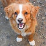Lächelndes Larz Stockfoto