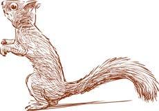 Lächerliches Eichhörnchen Stockbild