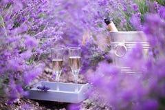 Läcker champagne över lavendel Arkivbild