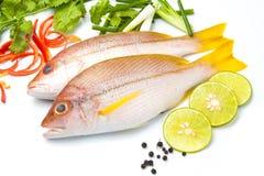 Läcker del av filén för ny fisk med den aromatiska örtkryddan Arkivfoton