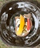 Läcker grönsaksmörgåsgroda royaltyfria foton