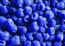 läcker naturlig bakgrund av många mogna ovanliga blått fr Royaltyfria Bilder