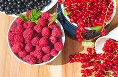 Läcker röd och svart vinbär för hallon, Royaltyfri Fotografi
