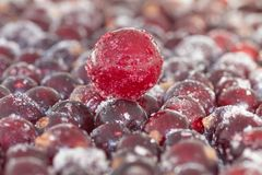 Läcker svart vinbär på huvudet av drottningen av körsbäret under isfilten bland den varma sommaren royaltyfri foto
