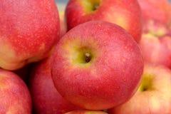läckert äpple Royaltyfri Fotografi
