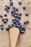läckert blåbär Arkivbilder