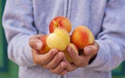 Läckra aprikors för handfull Arkivfoton