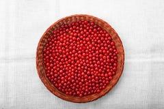 Läckra härliga röda tranbär i en träkorg En träspjällåda på en grå bakgrund Näringsrik röd vinbär Fotografering för Bildbyråer