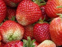 läckra jordgubbar Royaltyfri Bild