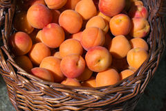 Läckra mogna aprikors i en korg Royaltyfri Bild