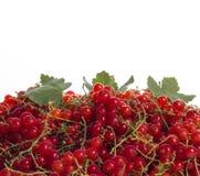 Läckra mogna röda vinbär arkivfoto