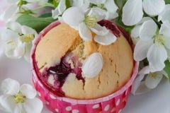 Läckra muffin med äpplet Royaltyfri Fotografi
