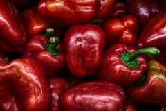 Läckra röda blickar för söta peppar som amaizing Fotografering för Bildbyråer