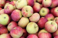Läckra tidiga macäpplen Royaltyfria Foton