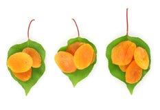 Läckra torkade aprikosar på gröna leaves Royaltyfri Fotografi