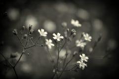 Läckra vita blommor Arkivfoton