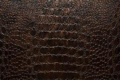 Läder för mörk brunt för krokodil konstgjort Arkivbilder