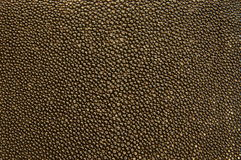 läderskridsko Arkivbilder