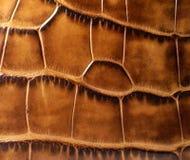 lädertextur Royaltyfri Bild