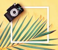 Lägenheten lägger av retro fotokamera, fotoram och palmblad mot minsta idérikt tropiskt begrepp för gul bakgrund royaltyfri foto