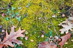 Lägenheten lägger bakgrundstexturblandningen av ljust - grön mossa som täcker svart jord, nÃ¥gra gröna växt av släktet Tri fotografering för bildbyråer