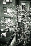 lägenhetstad New York Arkivfoton