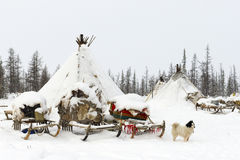 Läger av den nomad- stammen i den polara tundran Arkivfoton