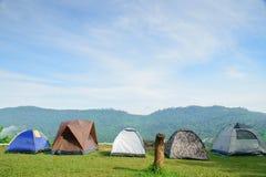 Läger- och vintersynvinkel som ser dimma Royaltyfri Foto