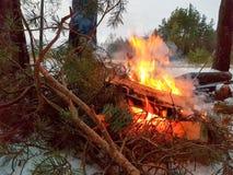 Lägereld med den röda flamman i vinterskogen fotografering för bildbyråer